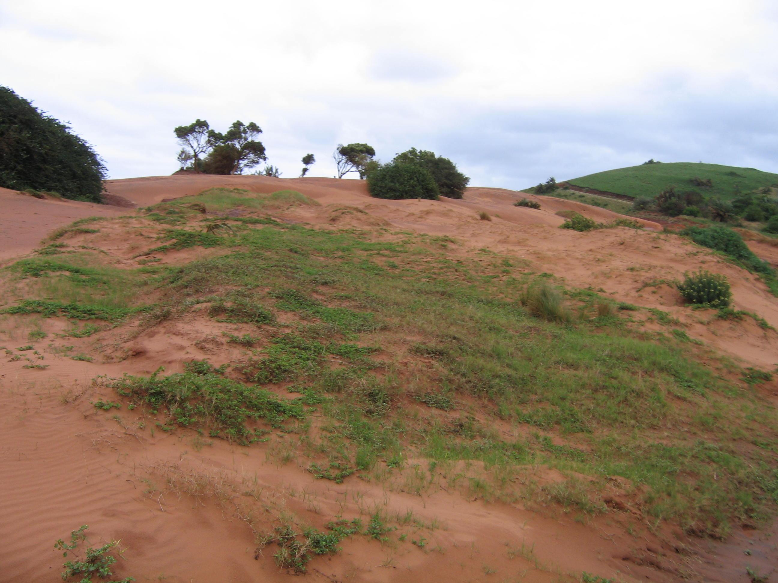 Dunes de sable rouge dans la wild coast