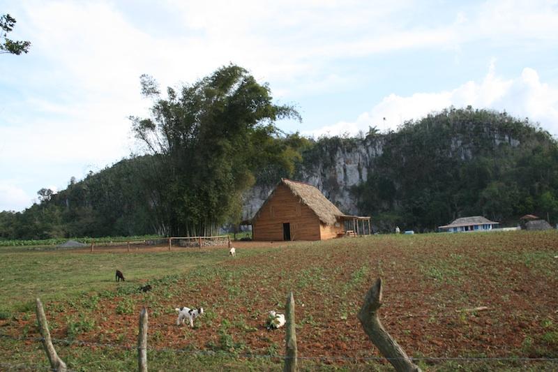 Mogote vallée de Viñales