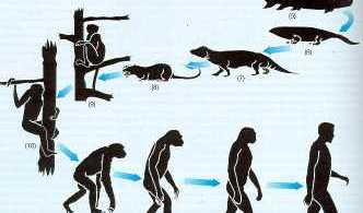 darwin-evolucion
