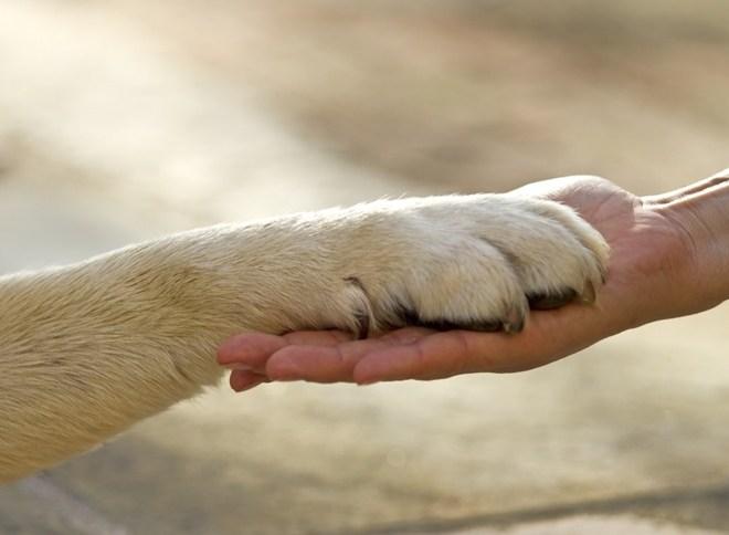 Derechos-Animales