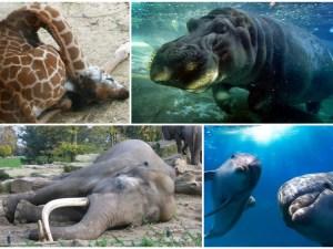 animales sueño