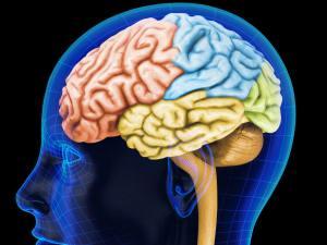 sedentarismo-reduce-tamaño-del-cerebro