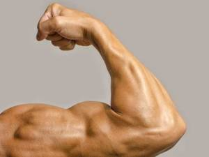 segundo-round-sexo-músculo