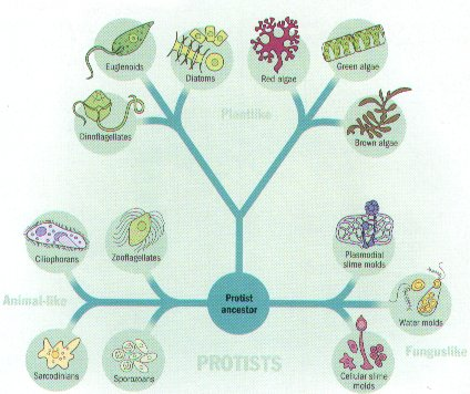 4_GB2_LearnRes_Web_03bact - protista examples