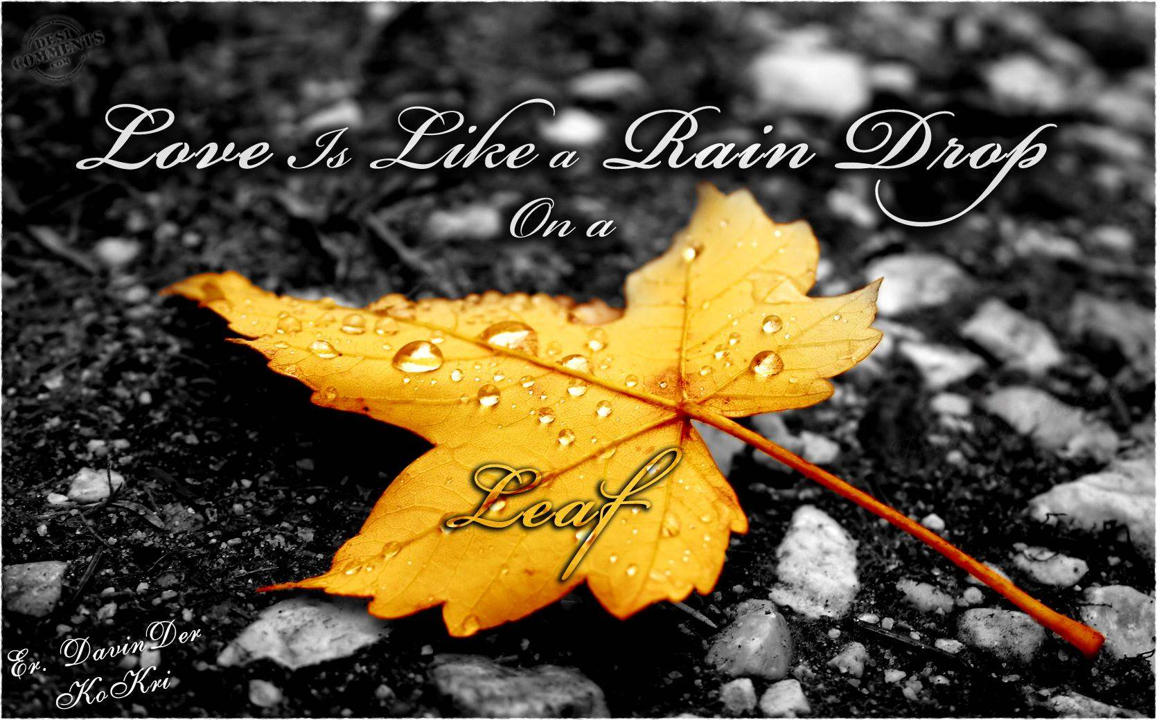 Drop Of Water Falling From A Leaf Wallpaper Love Is Like A Rain Drop On A Leaf Desicomments Com