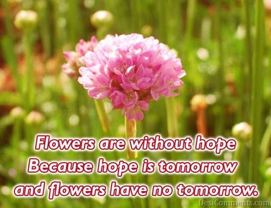 Very Very Sad Wallpapers With Quotes Flowers Are Without Hope Desicomments Com