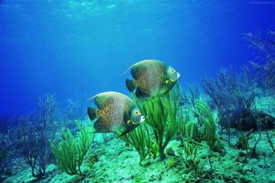 Life Underwater Wallpaper #75 - DesiComments.com