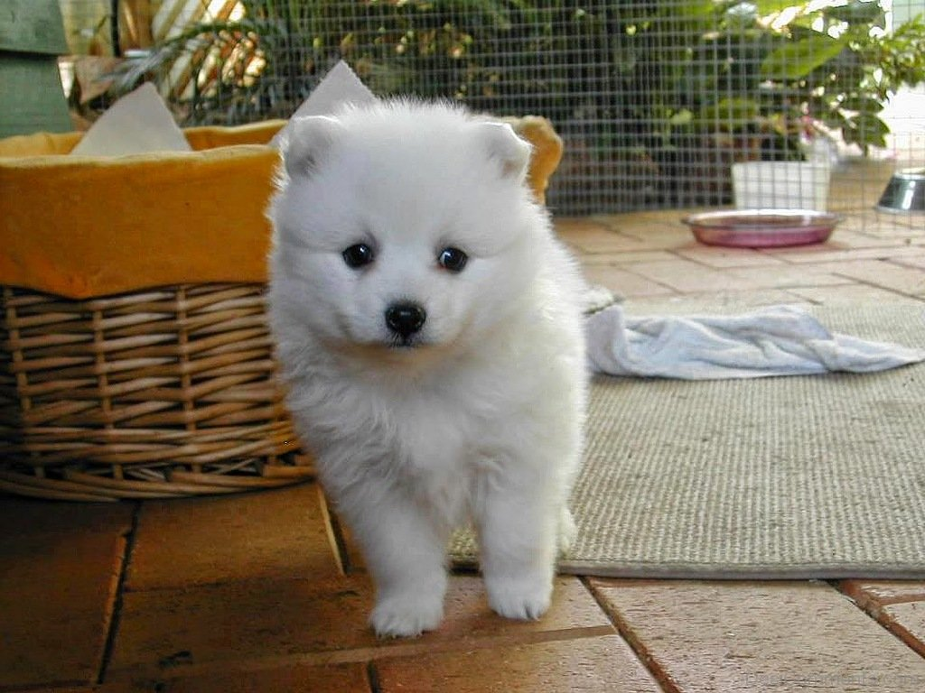 Cute Wallpaper With Quotes In Hindi Cute White Dog Desicomments Com