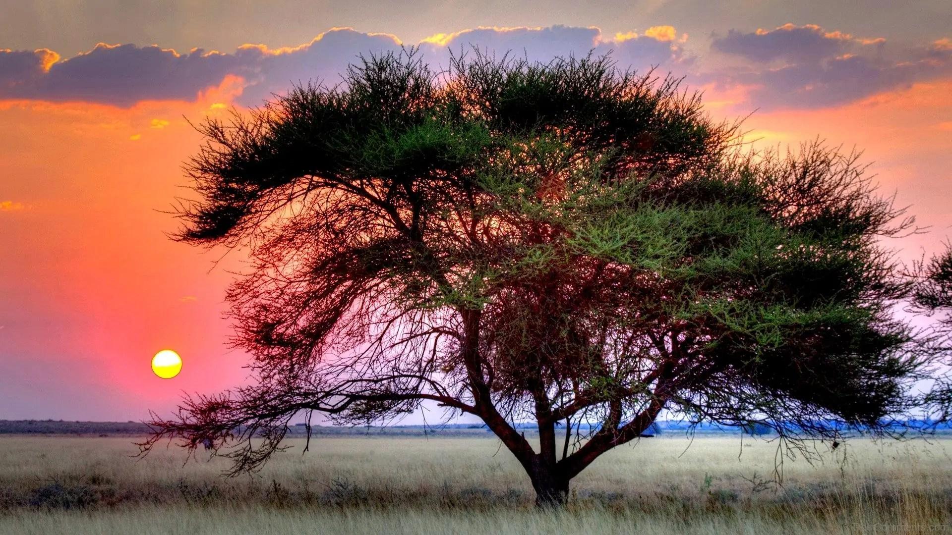 Hindi Sad Wallpaper Quotes Kalahari Desert And Sun Set Desicomments Com