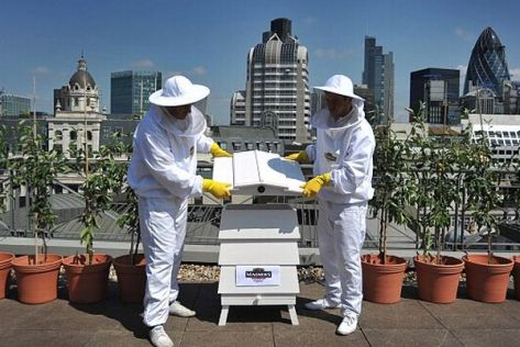 Britain's newest bee hive