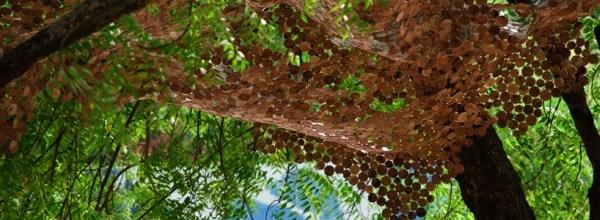 wooden_foliage_by_jwalant_mahadebwala_and_rooshad_shroff_bqvgt