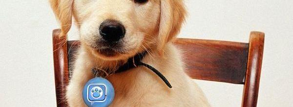 Puppy Tweets_1