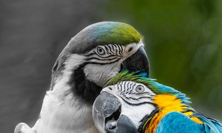Imagem: Visual Hunt