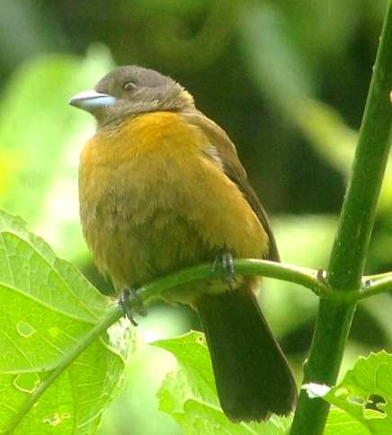 Bird Walk in Costa Rica