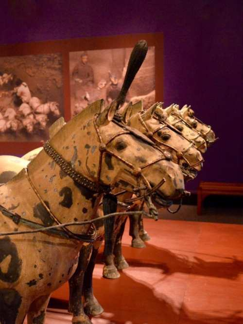 Terra Cotta Warriors Exhibit at the Field Museum, Chicago