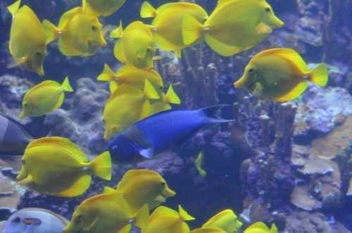 Tropical fish, Maui, Hawaii