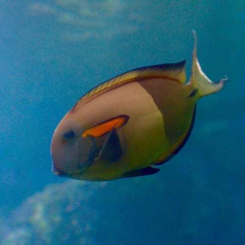 Tropical Fish on Maui, Hawaii