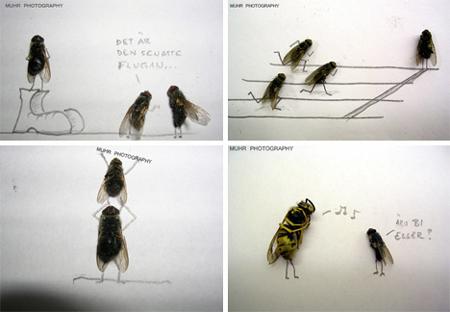dead fly photography