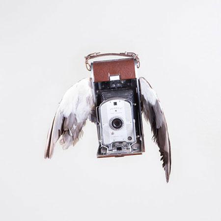 Birds-of-Aperture5
