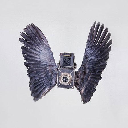 Birds-of-Aperture6