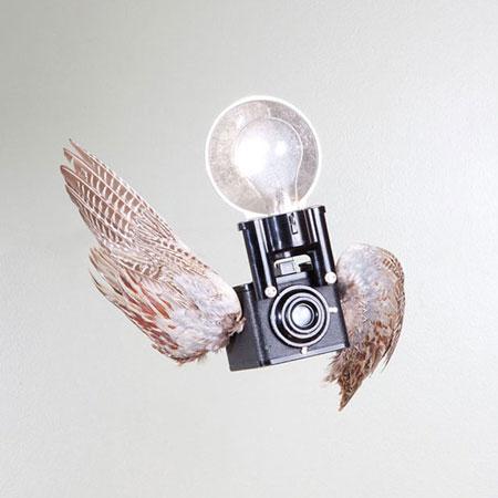 Birds-of-Aperture7