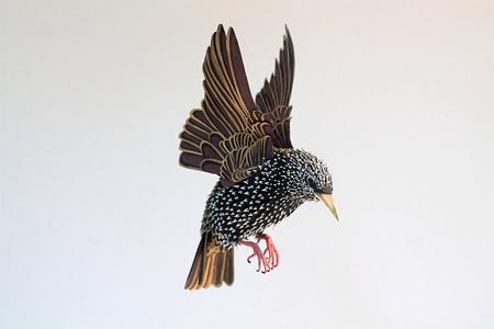 birds-71