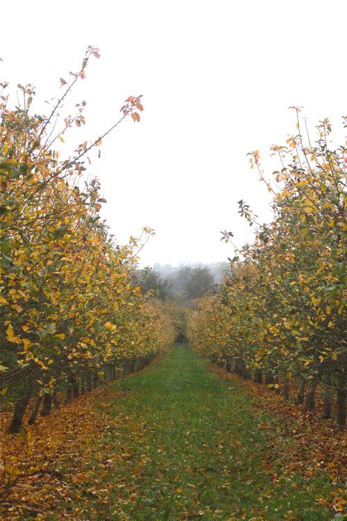 Fall Apples Wallpaper Fall ⋆ Design Mom