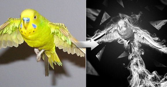 Creating a Surreal Smoking Bird Composition in Photoshop