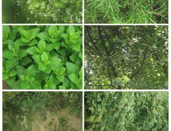 15 Stunning Free Hi-Res Nature Textures