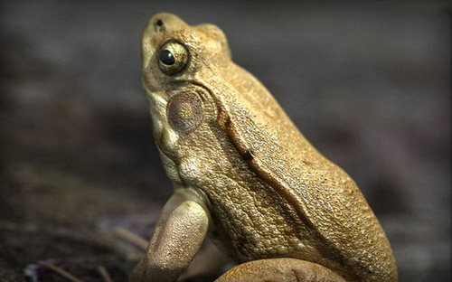 Male Green Frog in The Ultimate Collection Of Maya 3D Tutorials