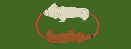 intructioart dogs