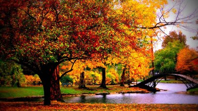 Autumn Wallpaper Examples for Your Desktop Background