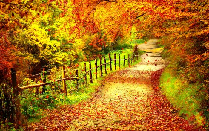 Fall Colors Computer Wallpaper Fall Background Images That You Can Use In Your Designs