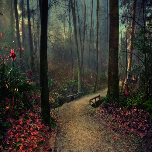 Mystical Creatures In The Fall Wallpaper Landscape Photography What It Is Amp Tips 200 Pictures