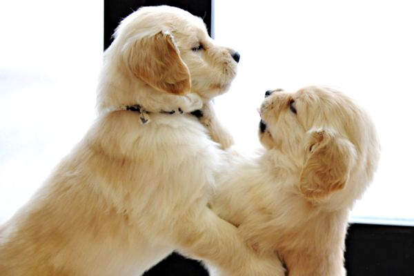 Cute Wallpapers For Girl Rooms Cutest Puppy Pictures And Pet Photography Tips