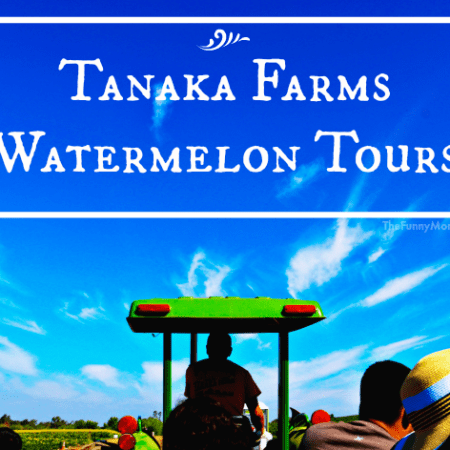 Tanaka_Farms_Watermelon_Tour