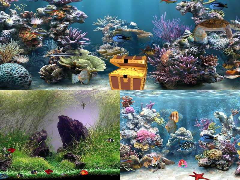 Animated 3d Wallpapers For Windows 7 Free Download Full Version Clear Aquarium Animated Wallpaper Desktopanimated Com