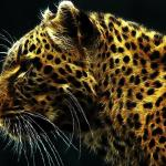 Fantastic Felines Animated Wallpaper