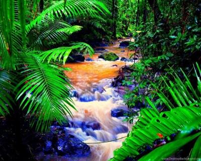 Amazon Rainforest Deforestation Wallpaper. Desktop Background
