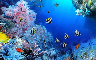 3d Aquarium Wallpapers Free Download. Download Fish Tank 3d Live ... Desktop Background