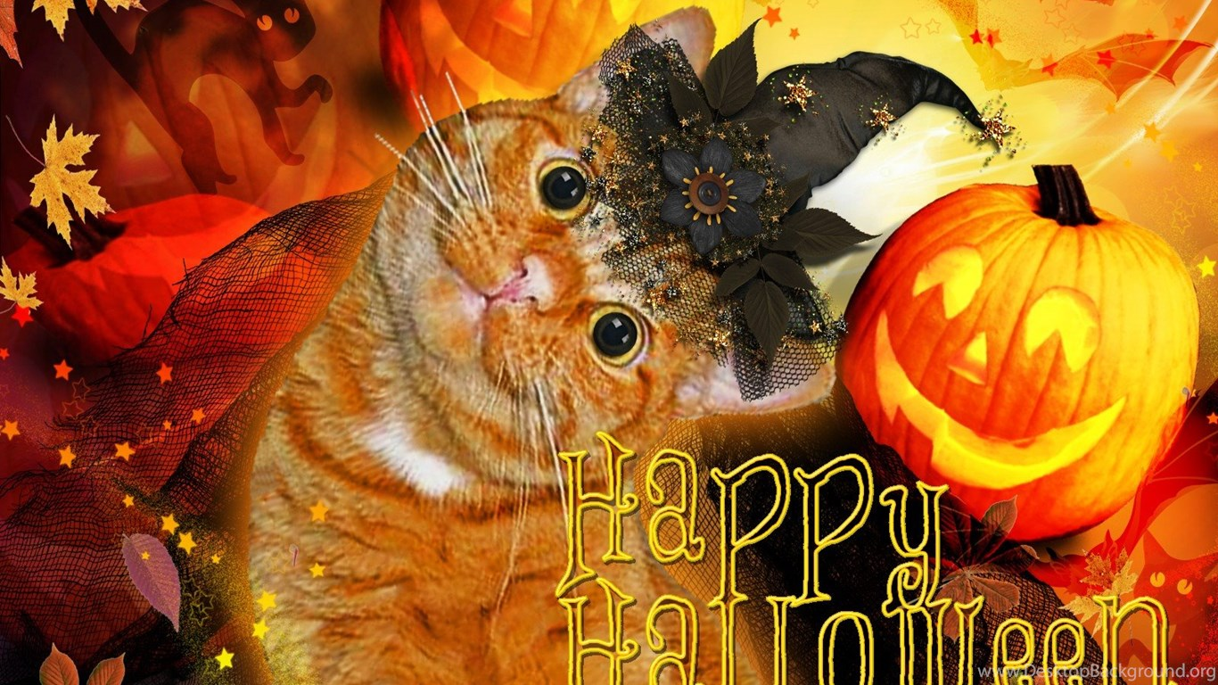 Cute Wallpapers For Iphone 5s Cats Happy Halloween Cat Jacko Lantern Cats Pumpkins Cute
