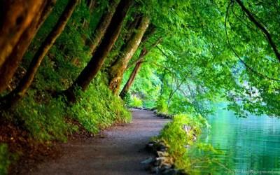 Nature Wallpapers High Resolution Free Download,desktop Wallpapers Desktop Background