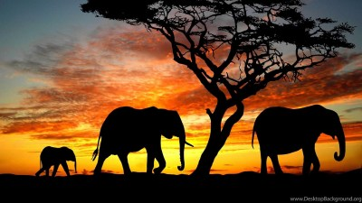 Elephant Family During Sunset HD Desktop Backgrounds Wallpapers ... Desktop Background