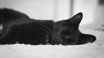 Black Cat Wallpapers Full HD [3840x2400] Free Wallpapers Full Hd ... Desktop Background
