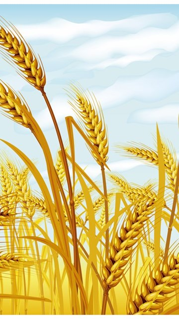 Wheat PowerPoint Template (PPT Slides), Wheat PPT Backgrounds - wheat template