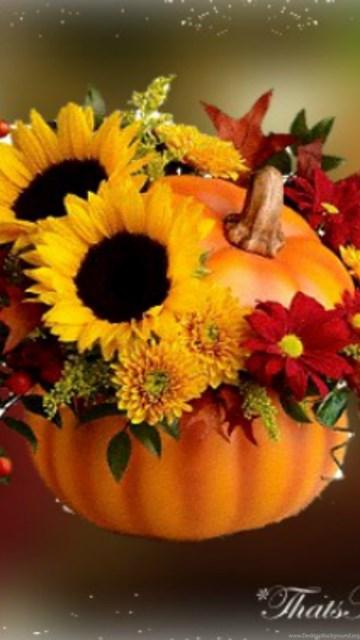 The Fall Bbc Wallpaper Fall Flowers Wallpapers Celebrate Autumn Fall Pumpkin