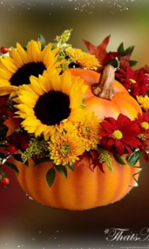 Fall Harvest Wallpaper 1024x768 Fall Flowers Wallpapers Celebrate Autumn Fall Pumpkin