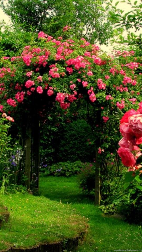 Iphone 4s Wallpapers Free Rose Garden Wallpapers Desktop Background