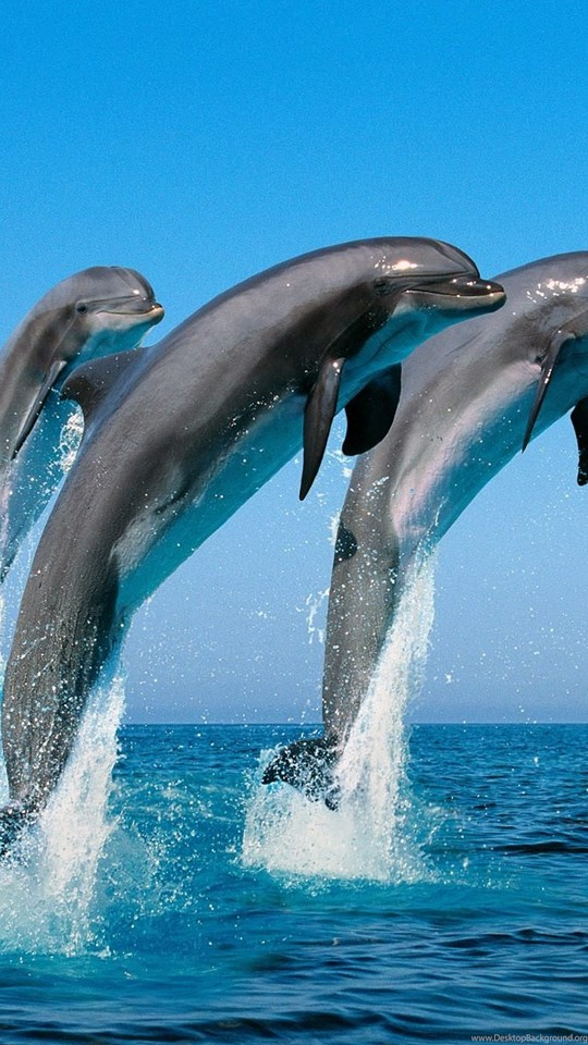 Free Cute Ipad Wallpapers Cute Dolphins Animal Swim Wallpapers Hd Wallpapers With