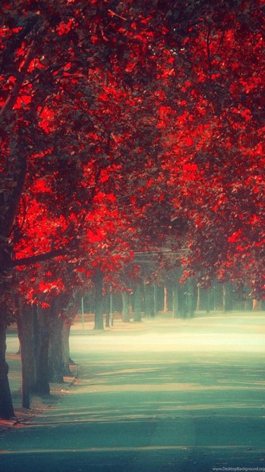 Fall Color Wallpaper Widescreen Nature Wallpaper Fall Tumblr Phone Wallpapers Wallpapers